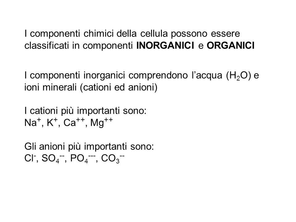 I componenti chimici della cellula possono essere