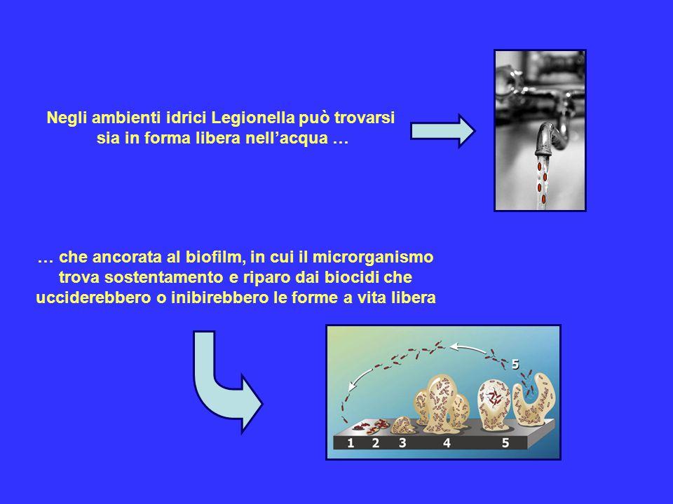 Negli ambienti idrici Legionella può trovarsi