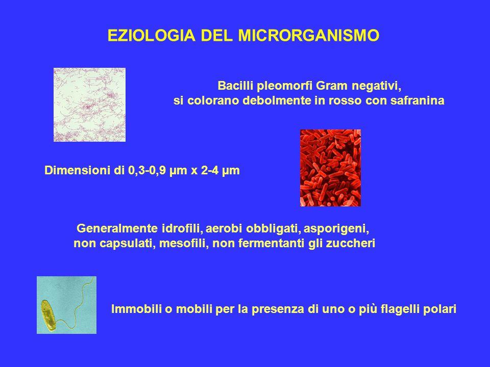 EZIOLOGIA DEL MICRORGANISMO