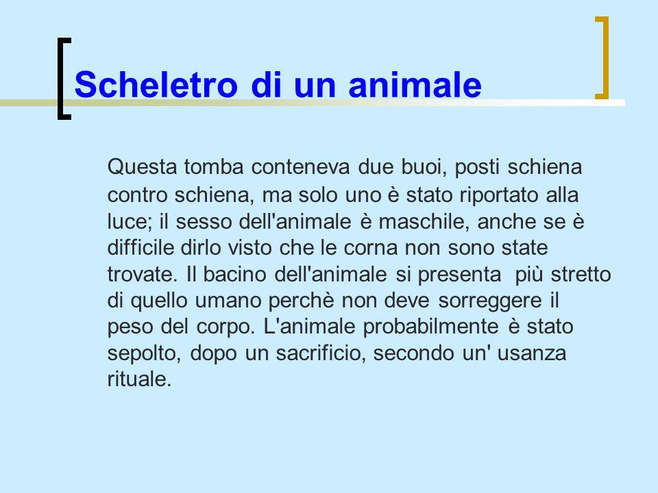 Scheletro di un animale