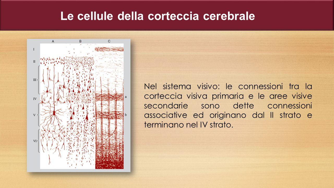 Le cellule della corteccia cerebrale