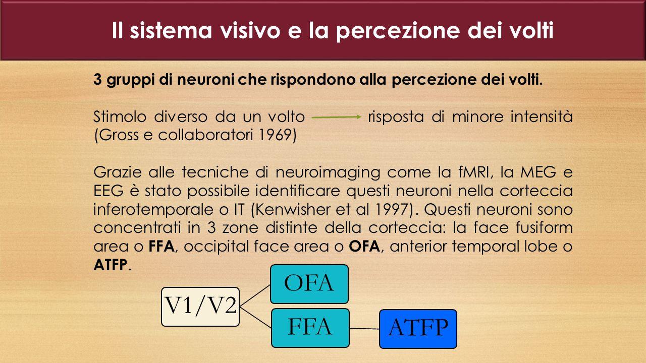 Il sistema visivo e la percezione dei volti
