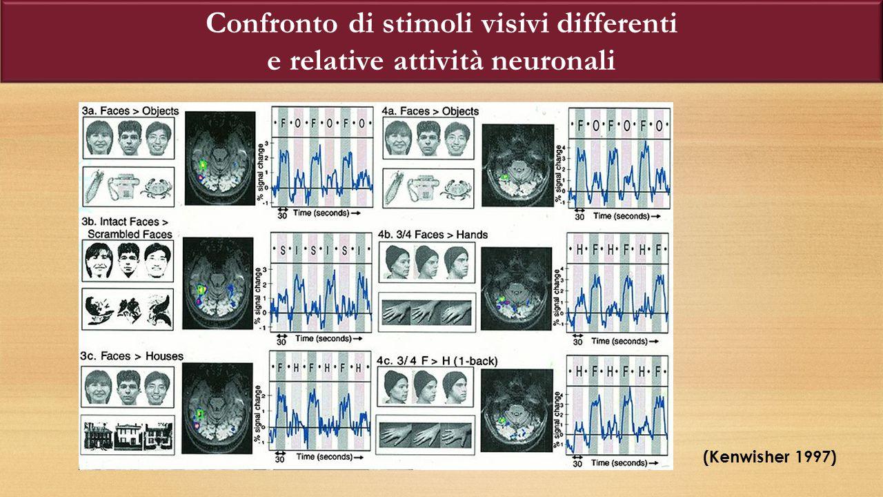 Confronto di stimoli visivi differenti e relative attività neuronali