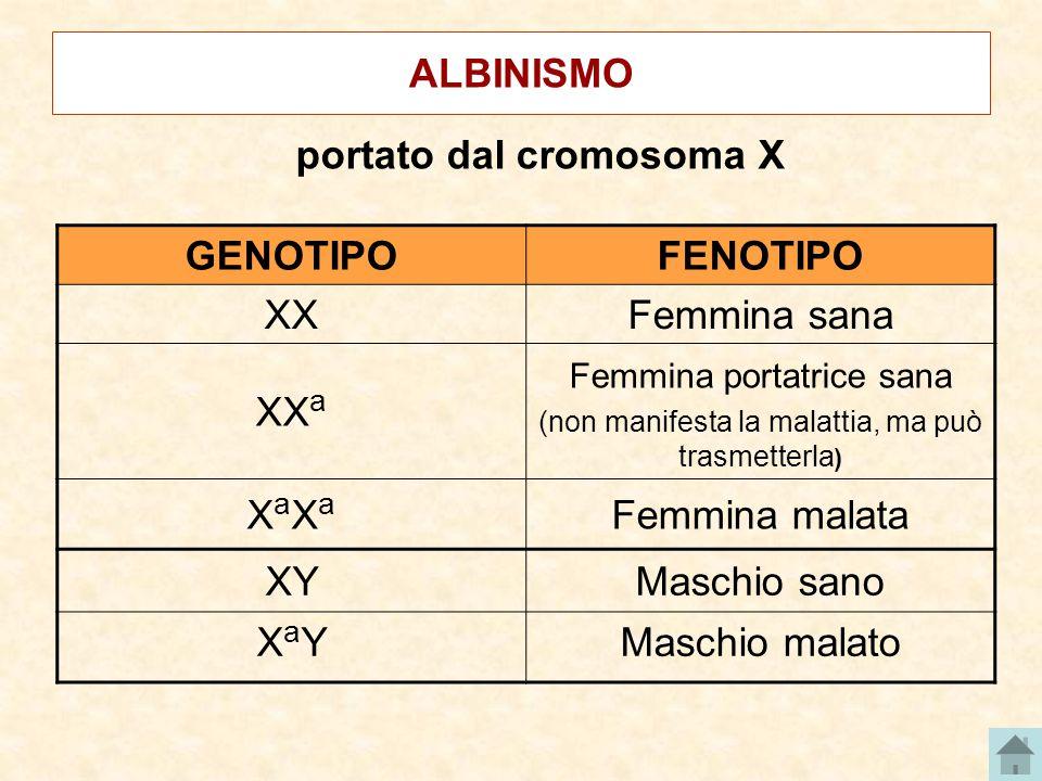 portato dal cromosoma X