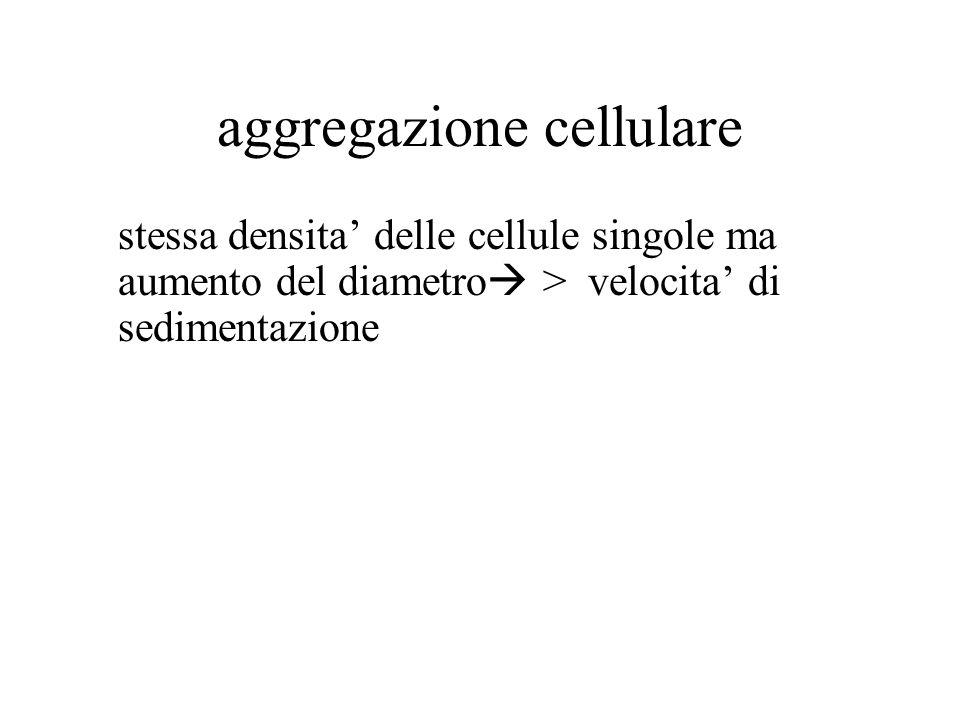 aggregazione cellulare