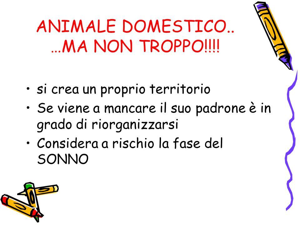 ANIMALE DOMESTICO.. …MA NON TROPPO!!!!