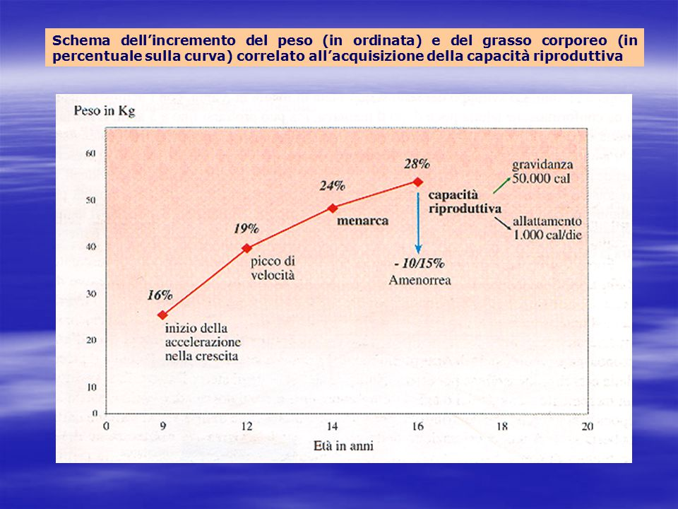 Schema dell'incremento del peso (in ordinata) e del grasso corporeo (in percentuale sulla curva) correlato all'acquisizione della capacità riproduttiva