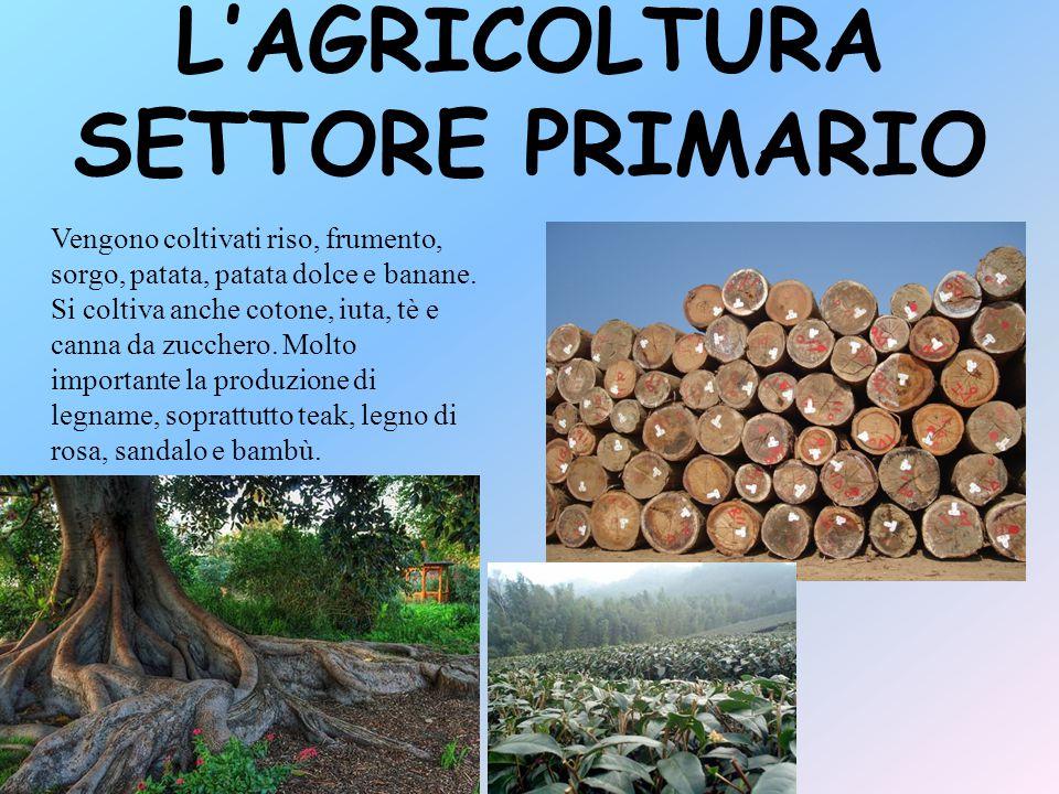 L'AGRICOLTURA SETTORE PRIMARIO