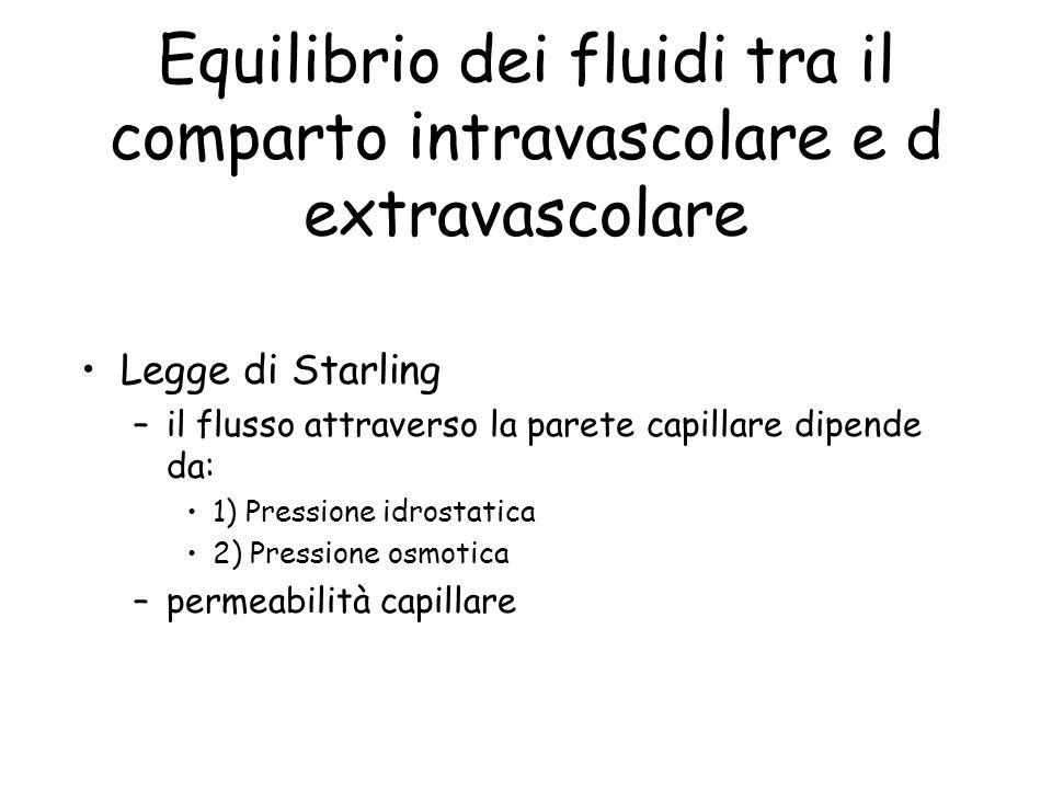 Equilibrio dei fluidi tra il comparto intravascolare e d extravascolare