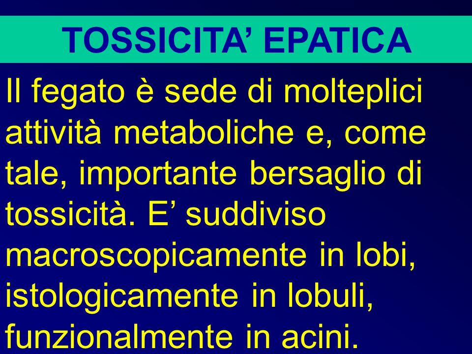 TOSSICITA' EPATICA