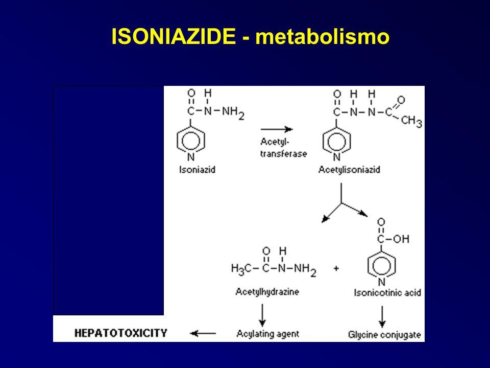 ISONIAZIDE - metabolismo