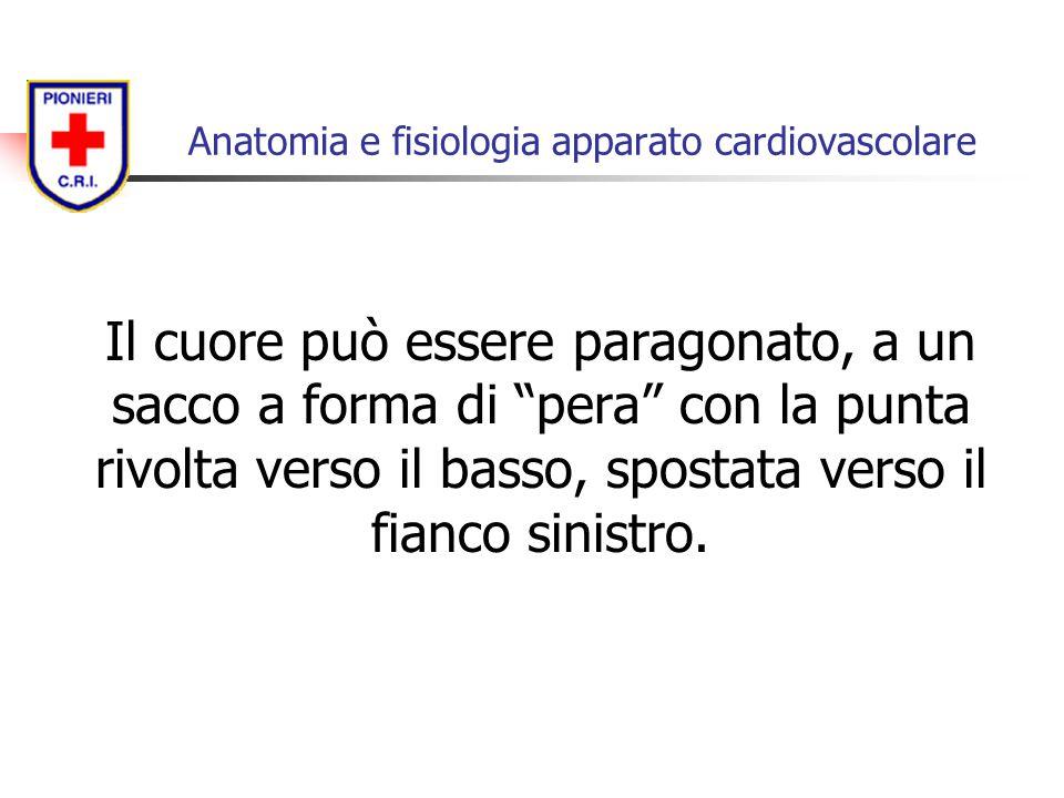 Anatomia e fisiologia apparato cardiovascolare