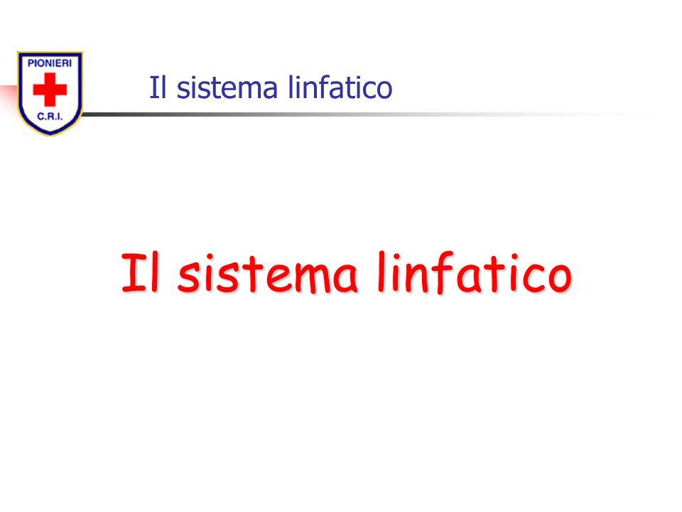 Il sistema linfatico Il sistema linfatico