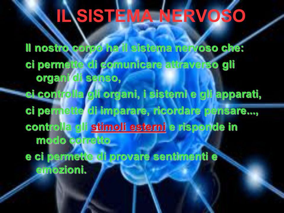 IL SISTEMA NERVOSO Il nostro corpo ha il sistema nervoso che: