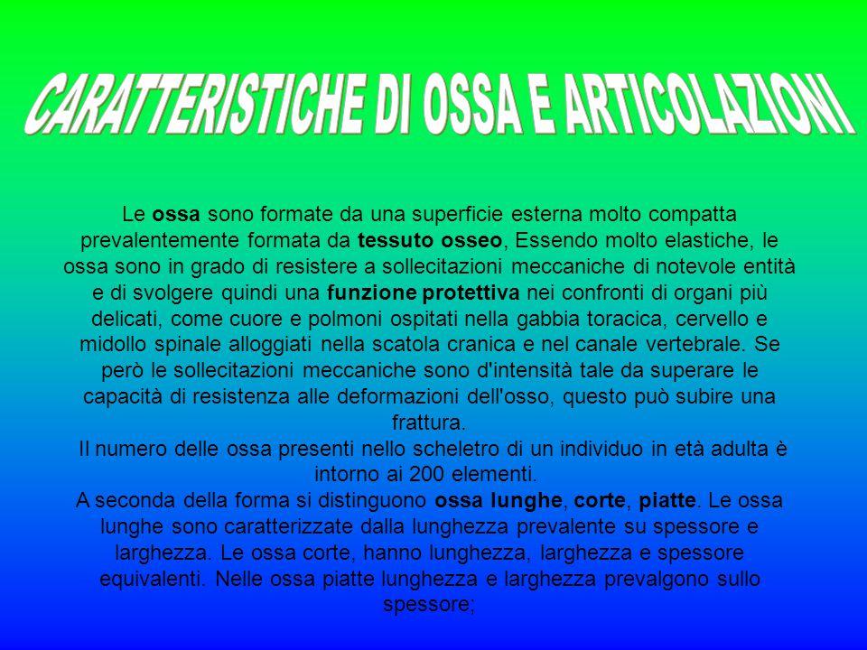 CARATTERISTICHE DI OSSA E ARTICOLAZIONI