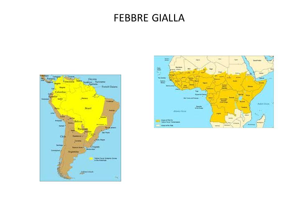 FEBBRE GIALLA