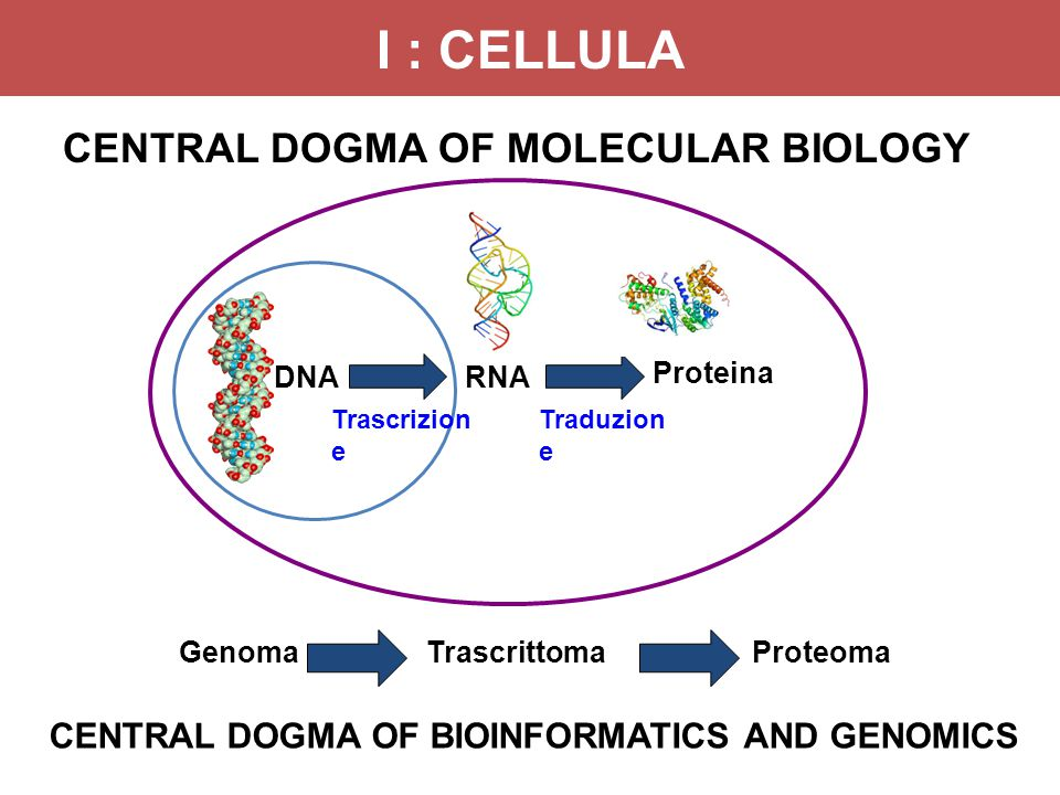 I : CELLULA CENTRAL DOGMA OF MOLECULAR BIOLOGY