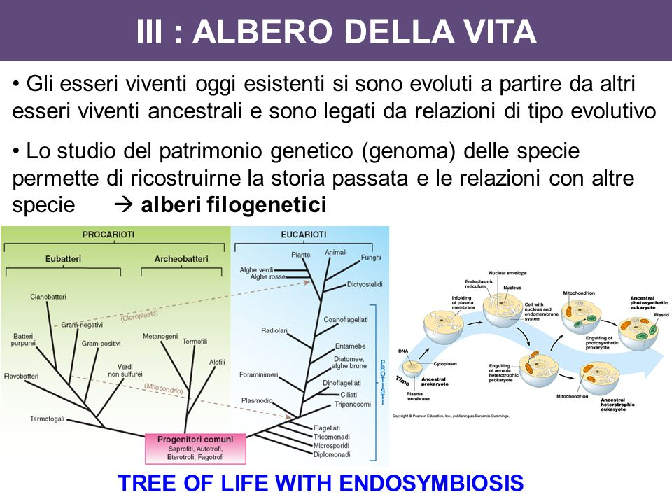 TREE OF LIFE WITH ENDOSYMBIOSIS