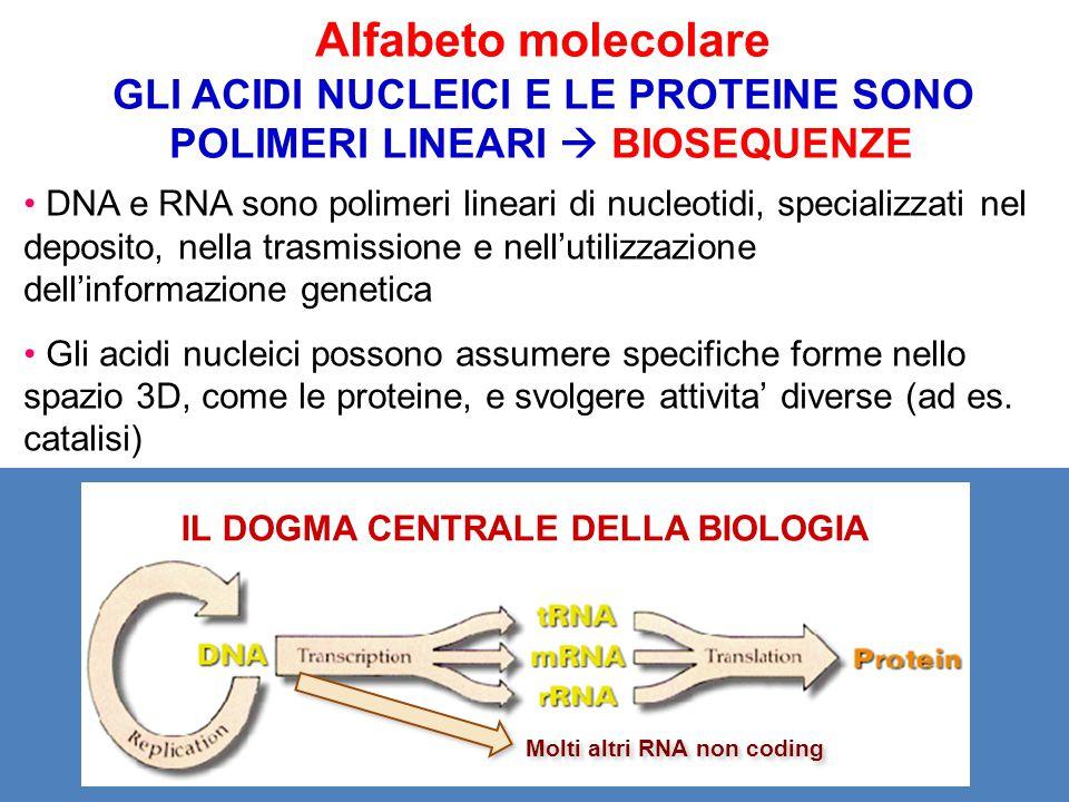 Alfabeto molecolare GLI ACIDI NUCLEICI E LE PROTEINE SONO POLIMERI LINEARI  BIOSEQUENZE.
