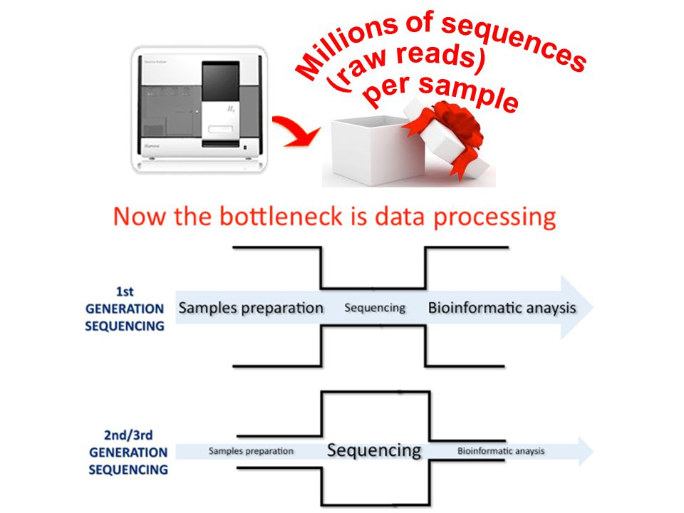 Millions of sequences (raw reads) per sample