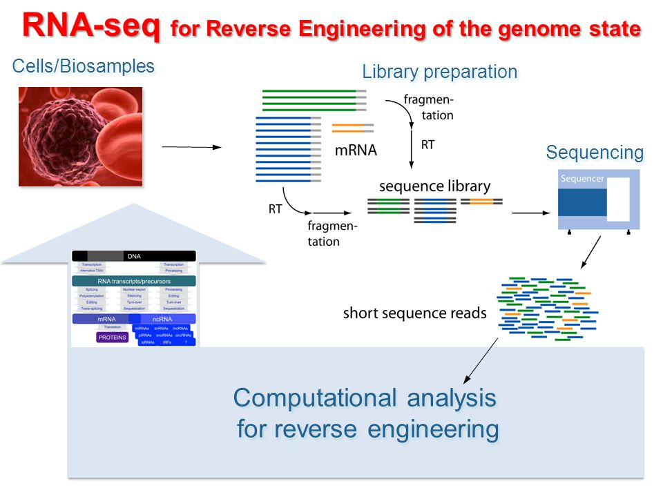 RNA-seq for Reverse Engineering of the genome state