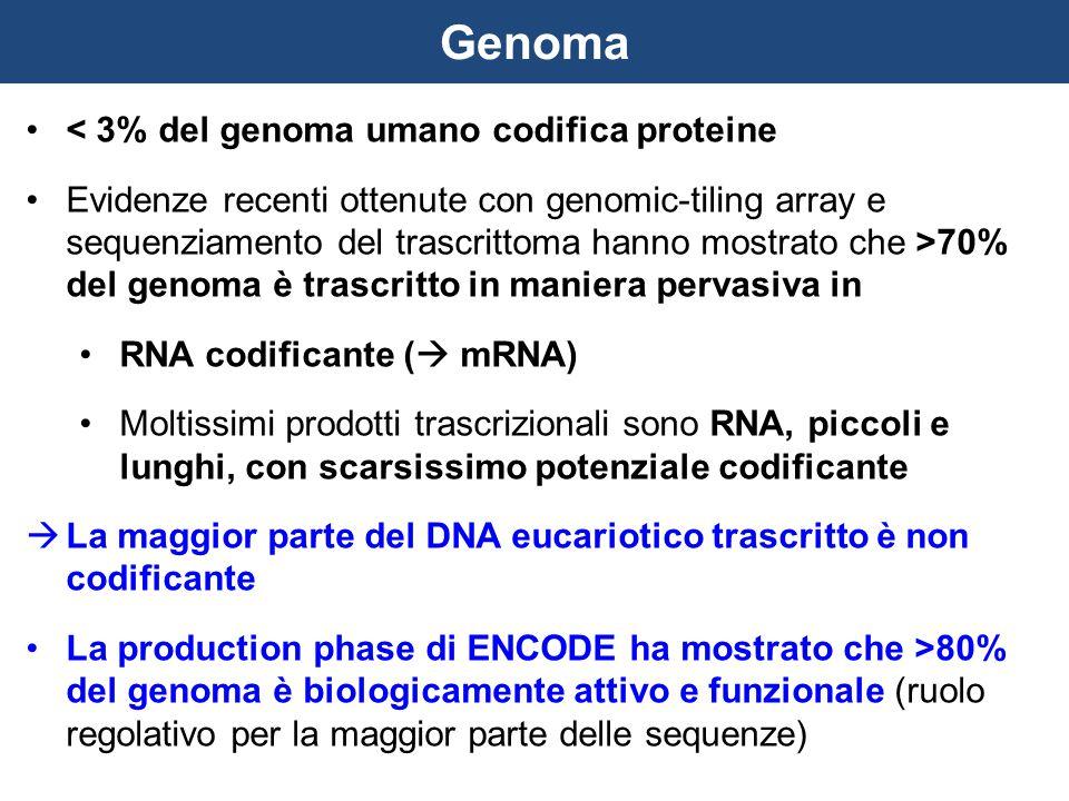Genoma < 3% del genoma umano codifica proteine