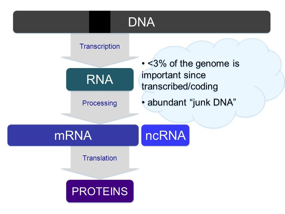 DNA RNA mRNA ncRNA proteins