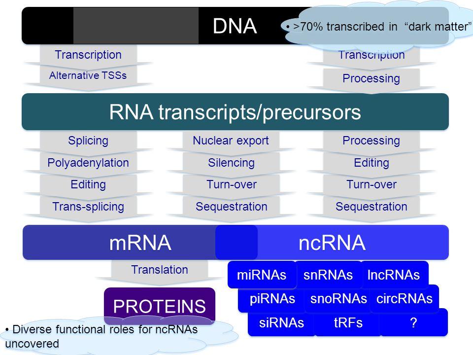 RNA transcripts/precursors