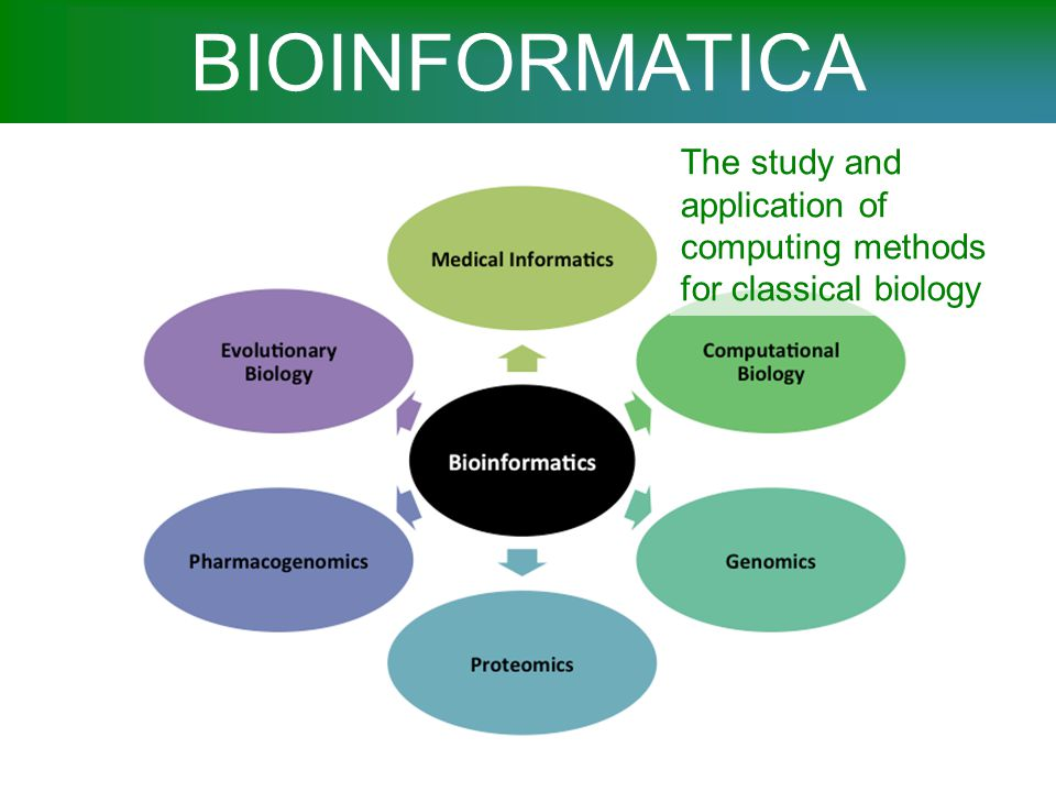 BIOINFORMATICA The study and application of computing methods for classical biology. SINONIMO BIOINFORMATICS.