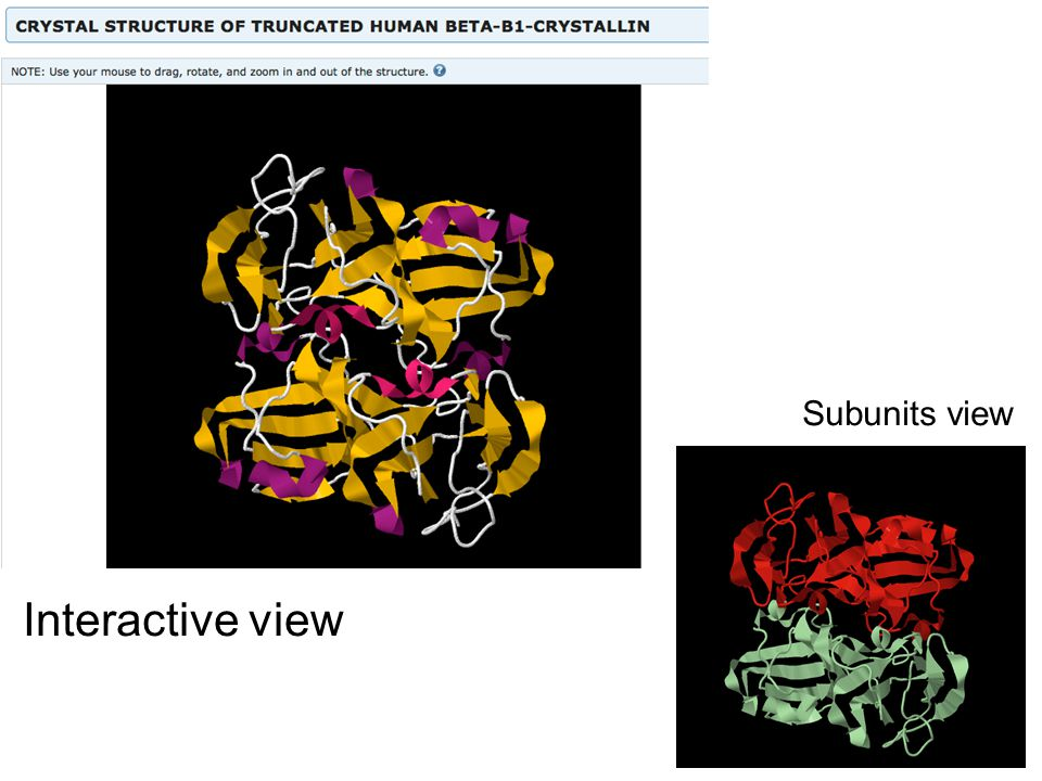 Subunits view Interactive view
