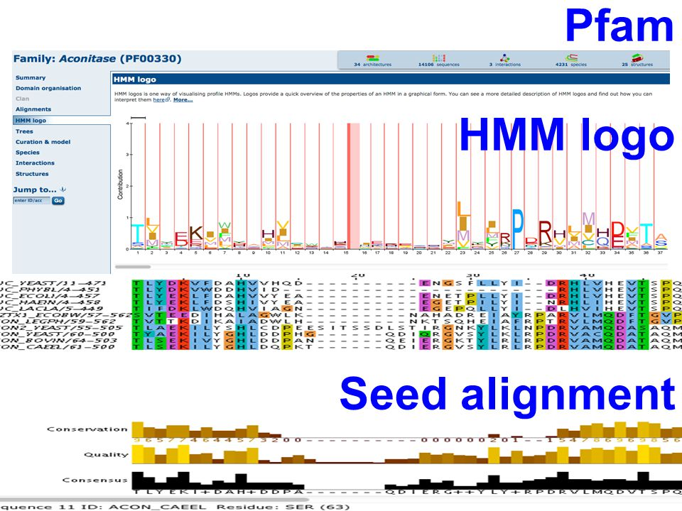Pfam HMM logo Seed alignment