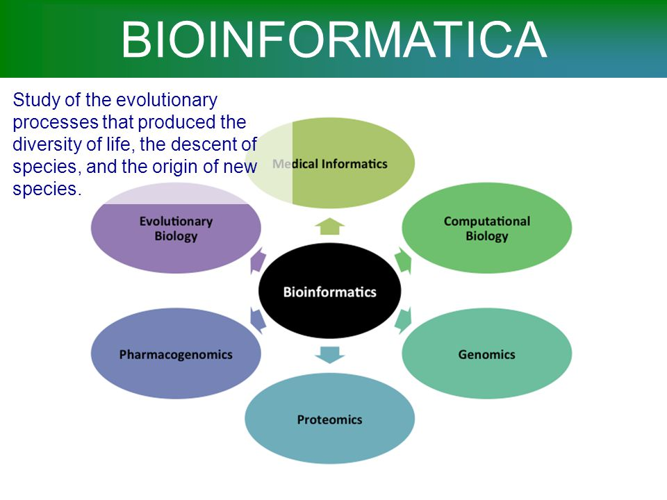 BIOINFORMATICA Study of the evolutionary processes that produced the diversity of life, the descent of species, and the origin of new species.