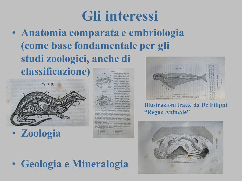 Gli interessi Anatomia comparata e embriologia (come base fondamentale per gli studi zoologici, anche di classificazione)