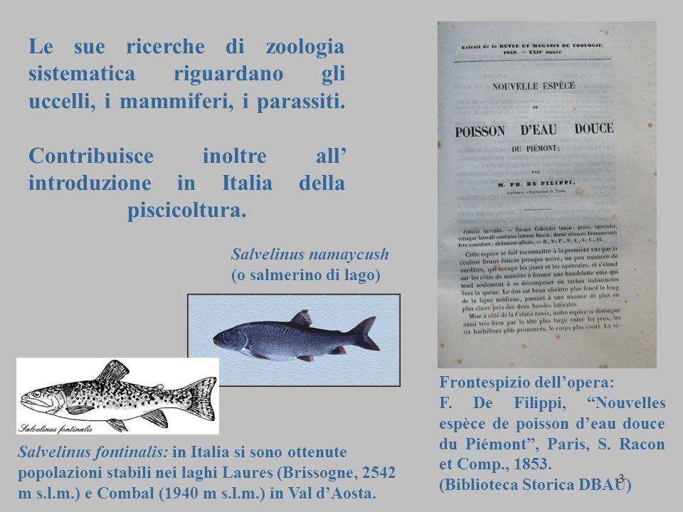 Le sue ricerche di zoologia sistematica riguardano gli uccelli, i mammiferi, i parassiti. Contribuisce inoltre all' introduzione in Italia della piscicoltura.