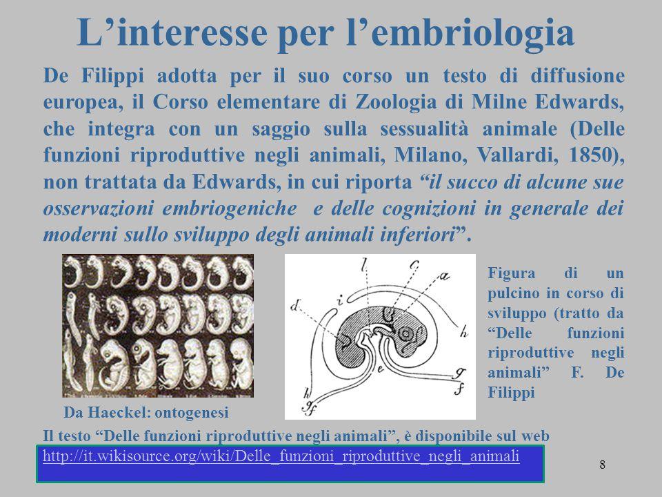 L'interesse per l'embriologia