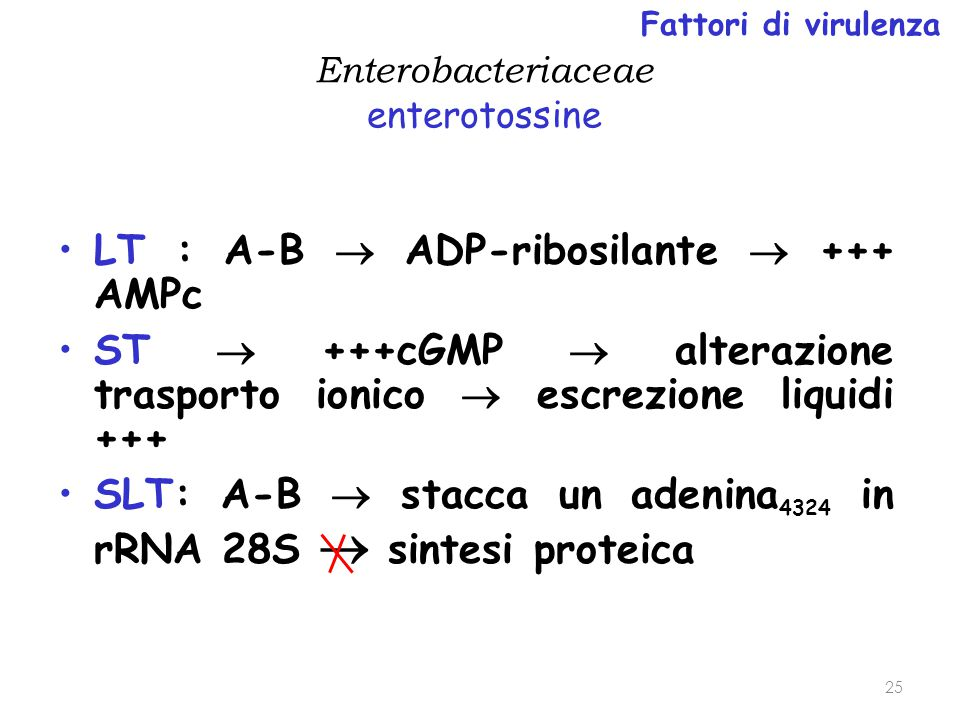 LT : A-B  ADP-ribosilante  +++ AMPc