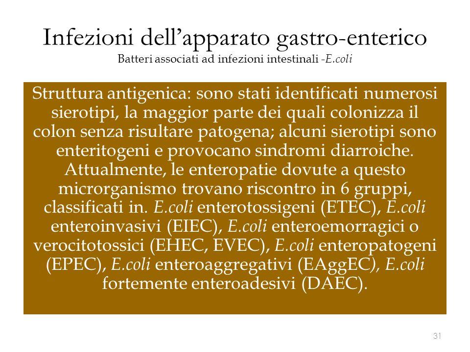 Infezioni dell'apparato gastro-enterico Batteri associati ad infezioni intestinali -E.coli