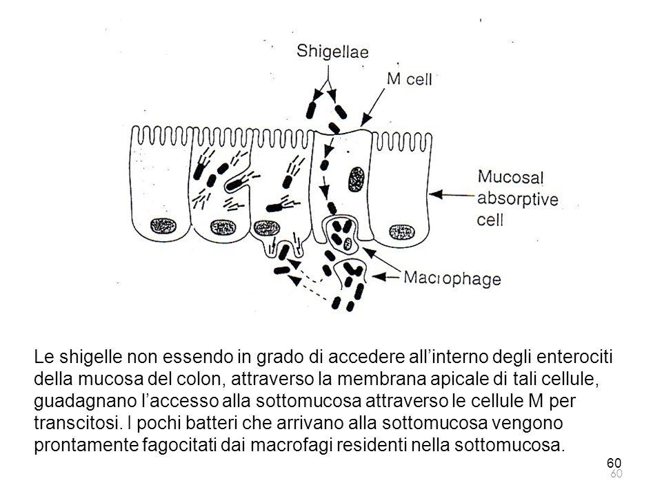 Le shigelle non essendo in grado di accedere all'interno degli enterociti della mucosa del colon, attraverso la membrana apicale di tali cellule, guadagnano l'accesso alla sottomucosa attraverso le cellule M per transcitosi. I pochi batteri che arrivano alla sottomucosa vengono prontamente fagocitati dai macrofagi residenti nella sottomucosa.