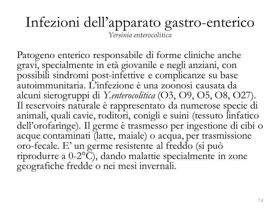 Infezioni dell'apparato gastro-enterico Yersinia enterocolitica