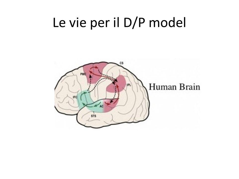 Le vie per il D/P model