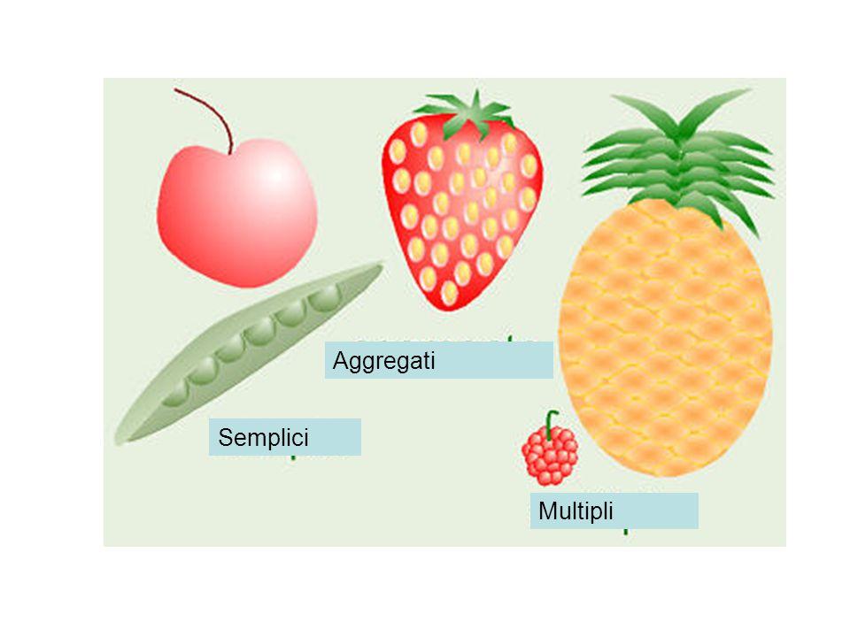 Aggregati Semplici Multipli