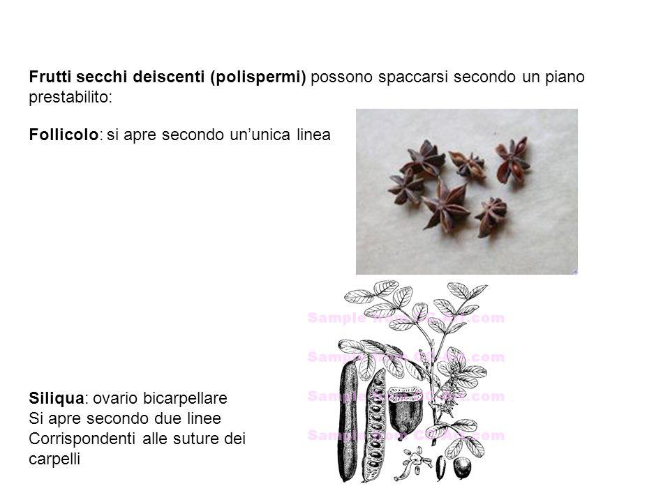 Frutti secchi deiscenti (polispermi) possono spaccarsi secondo un piano