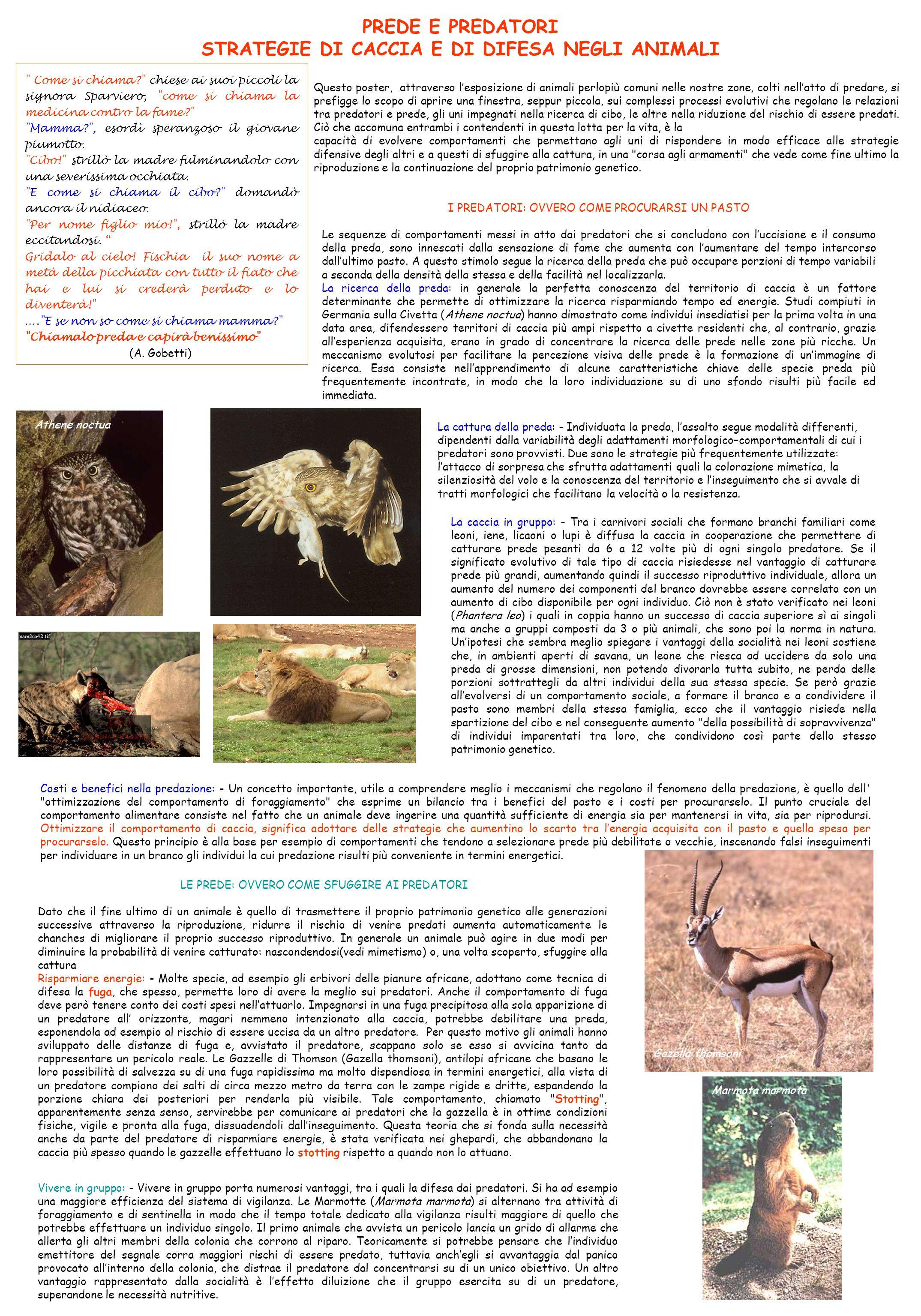 STRATEGIE DI CACCIA E DI DIFESA NEGLI ANIMALI