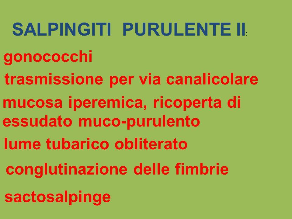 SALPINGITI PURULENTE II: