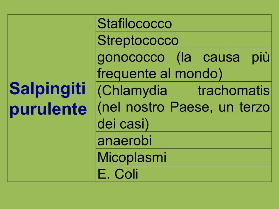 Salpingiti purulente Stafilococco Streptococco