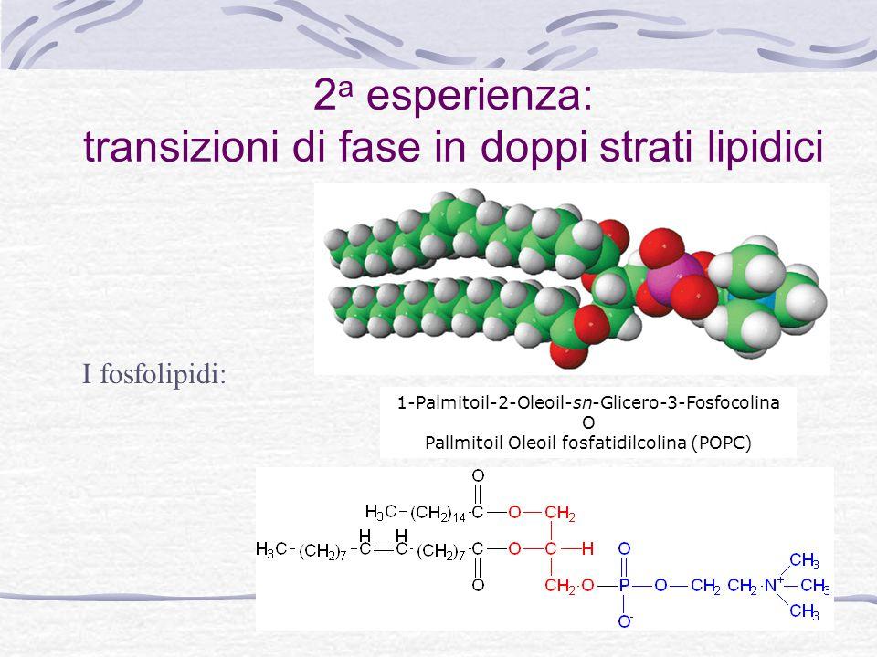 2a esperienza: transizioni di fase in doppi strati lipidici