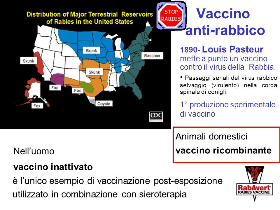 Vaccino anti-rabbico Animali domestici vaccino ricombinante Nell'uomo