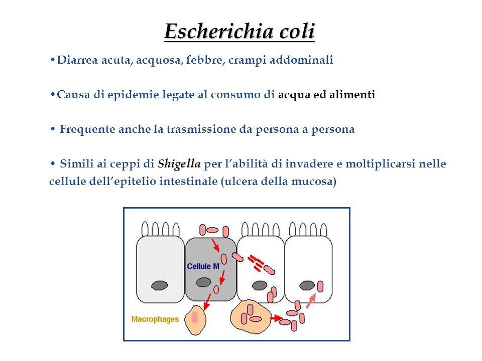 Escherichia coli Diarrea acuta, acquosa, febbre, crampi addominali
