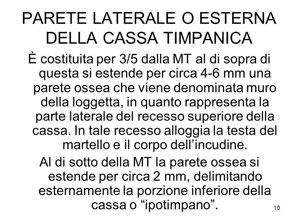 PARETE LATERALE O ESTERNA DELLA CASSA TIMPANICA