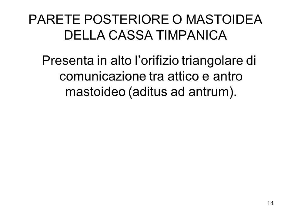 PARETE POSTERIORE O MASTOIDEA DELLA CASSA TIMPANICA